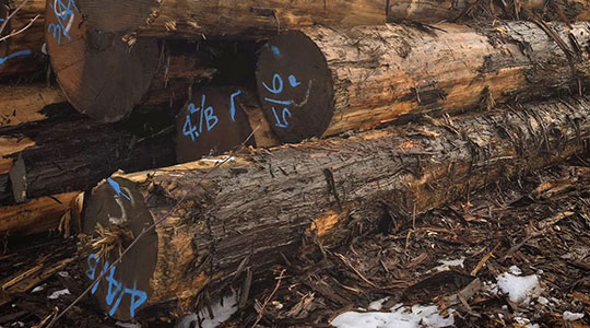 M'sの特徴:世界中から集めて 厳選した木材