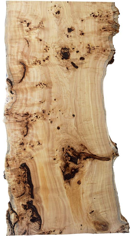 M's–無垢一枚板 取扱樹種紹介:ポプラ瘤