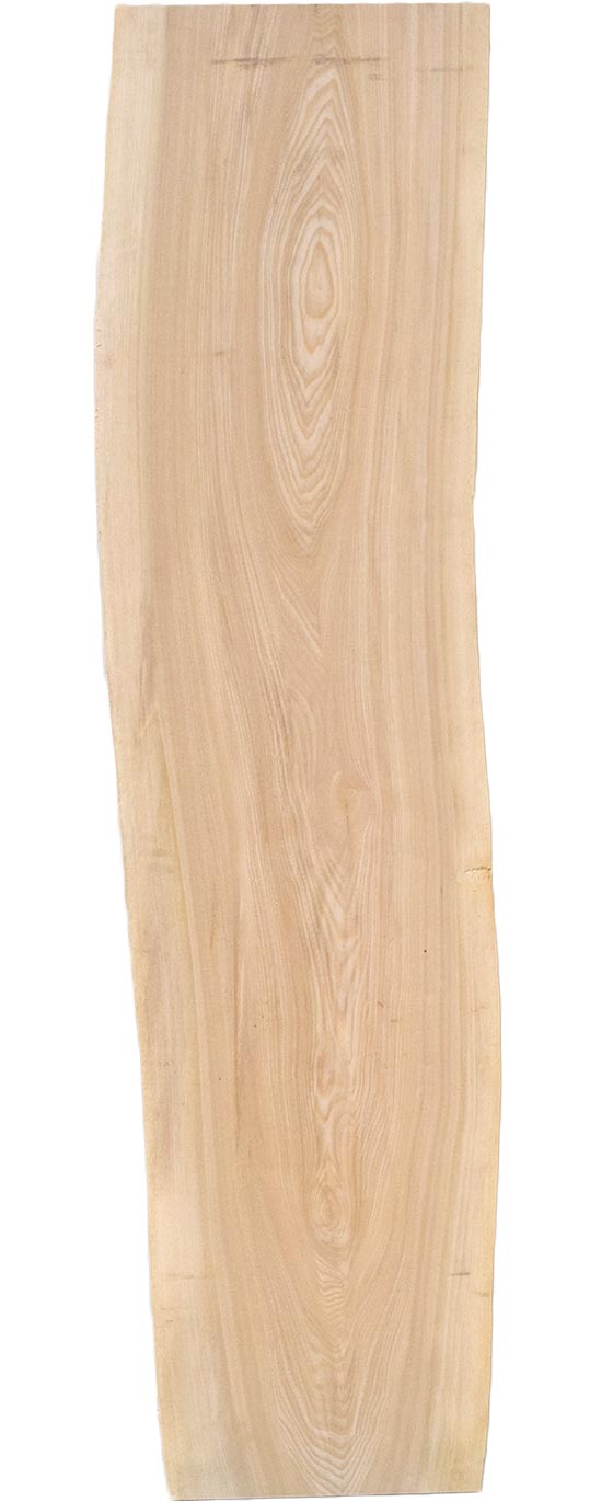 M's–無垢一枚板 取扱樹種紹介:セン(栓)